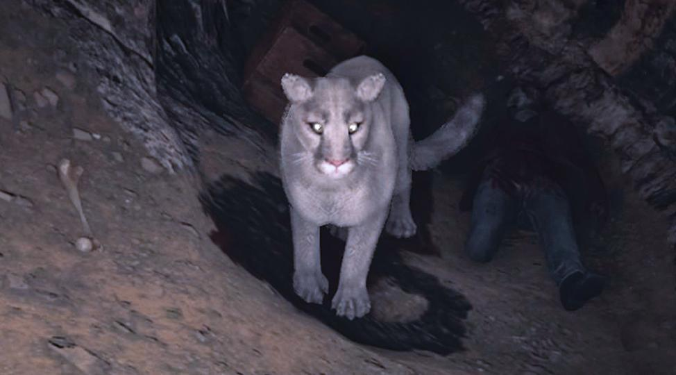 White cougars