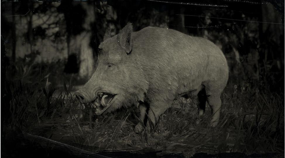 Wild Boar - Red Dead Redemption 2 Animals Species & Wildlife